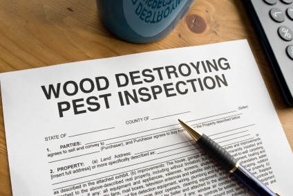 Termite Inspections Houston - Protex Pest Control