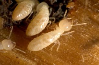 Termite damage is often hidden.