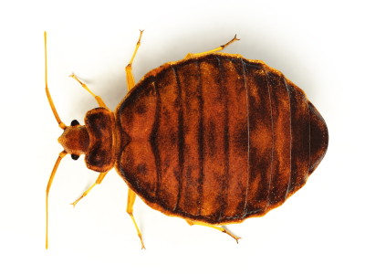 Bed Bug Extermination - Protex Pest Control Houston