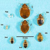 Bed Bug Control Houston - Protex Pest Control