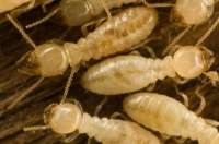 Termite Control Protex Pest Control Houston TX