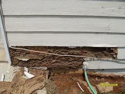 Termites Love Wood Siding - Protex Pest Control Houston