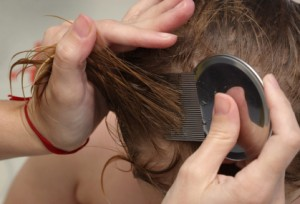 Head Lice Nit Removal