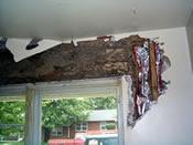 Termite Treatment Houston - Protex Pest Control